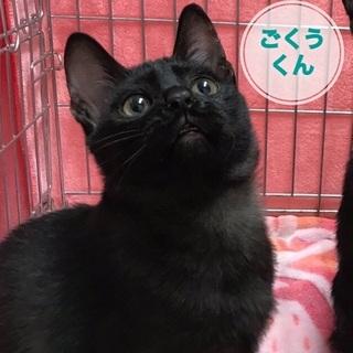 生後約7か月: アニメ顔の小柄な黒猫男子!