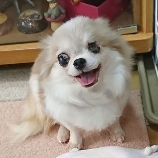 癒し系笑顔がかわいい、フレンドリーな甘えん坊さん♪