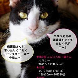 【猫さんとの暮らし方】セミナーのご案内です!