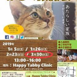 第5回 ハッピータビークリニック 猫の譲渡会