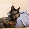 元気で懐こい さび猫 マカロンちゃん♪ サムネイル3