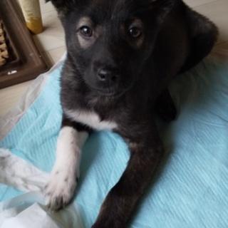 先住犬のいるお宅で新しい家族を探しています!