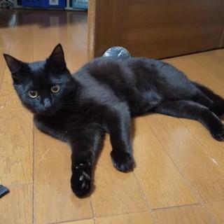 クリクリおめめの黒猫の男の子