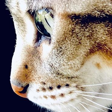 吾輩はトラ猫である