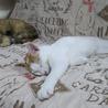 猫も人間も大好きっ! サムネイル2