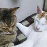 猫も人間も大好きっ! サムネイル3