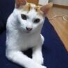 猫も人間も大好きっ! サムネイル4