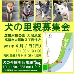 【淀川河川公園】犬の里親募集会