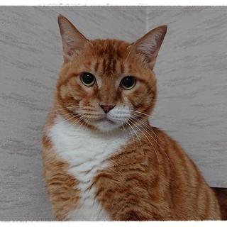 ソックスを履いた可愛いトラ猫