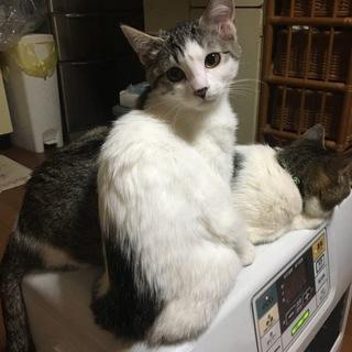 11月7日生まれ 子猫の里親さん募集中!