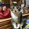 【交渉中】11月7日生まれ 子猫の里親さん募集中! サムネイル2