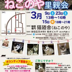 3月15日(金) 地域猫から社会猫へ FIPフリー 四谷猫廼舎ナイター里親会(ボランティア募集中) サムネイル1