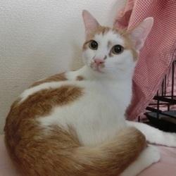 3月15日(金) 地域猫から社会猫へ FIPフリー 四谷猫廼舎ナイター里親会(ボランティア募集中) サムネイル3