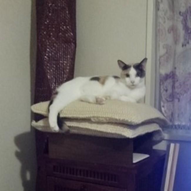 しあわせな猫の国のカバー写真