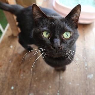 人懐っこい黒猫さんです(代理募集)