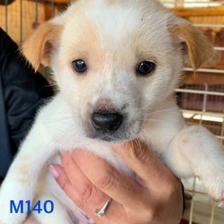 M140 可愛い子犬です。