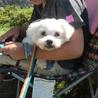 保護犬ナンバーD1289 マルチーズ×シーズー サムネイル2