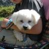 保護犬ナンバーD1289 マルチーズ×シーズー サムネイル3