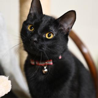 人も遊びも大好きな黒猫くん