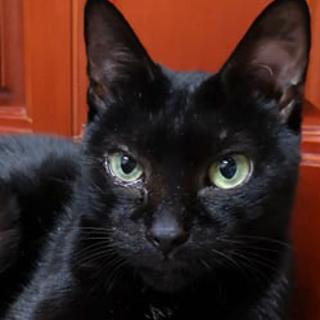実はおなかが白い小柄な黒猫