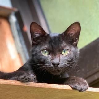 おパンツ履いてる黒猫です。