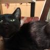おパンツ履いてる黒猫です。 サムネイル4