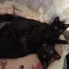 おパンツ履いてる黒猫です。 サムネイル5