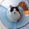 気ままに猫らしく生きたい僕 サムネイル2