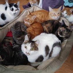 「ラブとハッピーにいる猫たち」サムネイル1
