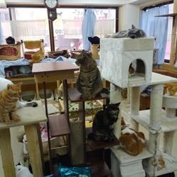 「ラブとハッピーにいる猫たち」サムネイル2