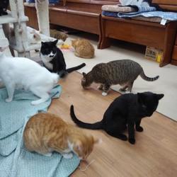「ラブとハッピーにいる猫たち」サムネイル3