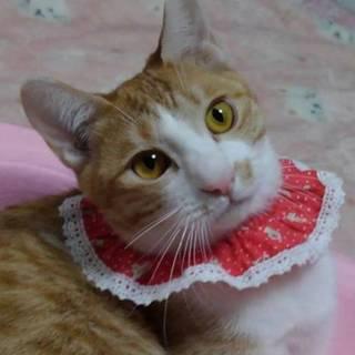 【3/17東日本橋】気の小さな甘えん坊♡幸太くん