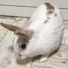 幸せウサギになりました(#^.^#)