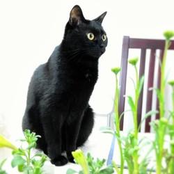 「監視する猫」サムネイル1