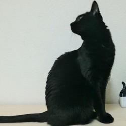 「監視する猫」サムネイル2