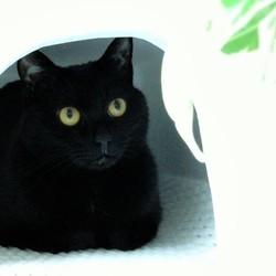 「監視する猫」サムネイル3