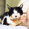 油をかけられた白血病キャリアの猫さん サムネイル2