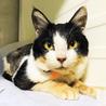 油をかけられた白血病キャリアの猫さん サムネイル3