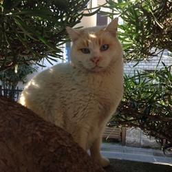 「猫おじさまと地域猫」サムネイル2