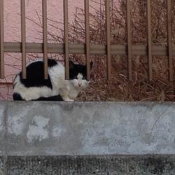 「猫おじさまと地域猫」サムネイル3