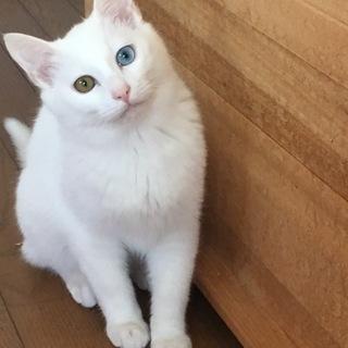美しい瞳の男の子・ユウちゃん