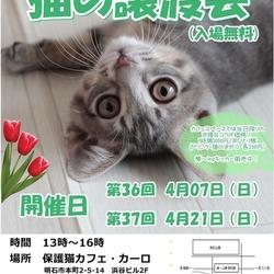 明石【猫の譲渡会】猫まみれwithカーロ 第36回