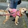 ビビリですが、犬が大好きな優しい女の子。 サムネイル4