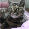【5ヵ月】キジトラ♀ 職場にいついた猫です サムネイル3