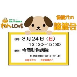 譲渡会 in 今岡動物病院(和泉市)