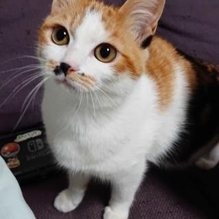 子猫(三毛)里親募集中‼️
