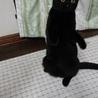 子猫保護中☆里親募集‼️ サムネイル2