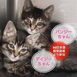 子犬と猫の里親会 in 戸越銀座商店街