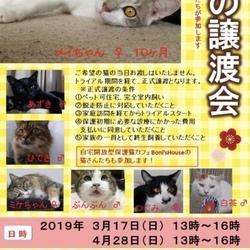 東京都小平市たかの台にて譲渡会!