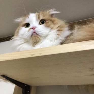 天井に近いから、見晴らしがいいにゃ